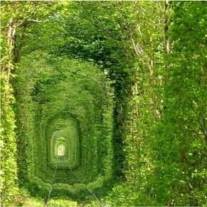 A Maze Of Life.